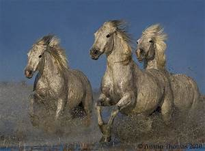 40 Beautiful Examples Of Equine Photography « heavensgraphix