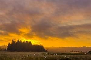 Beautiful, Cluxewe, River, Estuary, Sunset, British, Columbia