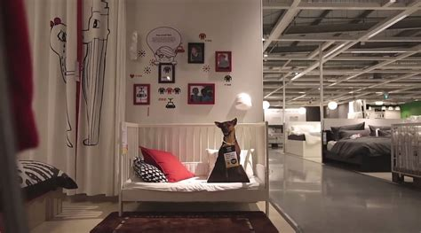 ikea advertises adoptable dogs  stores