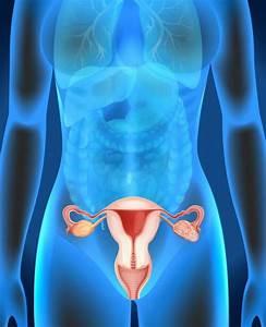 Ovarian Cancer Stock Vectors  Royalty Free Ovarian Cancer