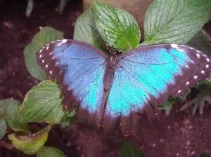 Jardins Des Papillons Hunawihr Avis by Jardins Des Papillon Hunawihr Alsace France Photo De
