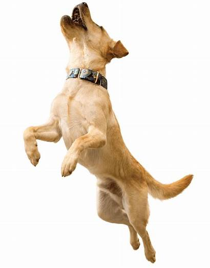 Oa Canine Grade Dog Jumping Dogs Force