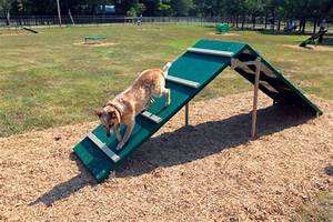 dog park agility equipment home With best dog agility equipment