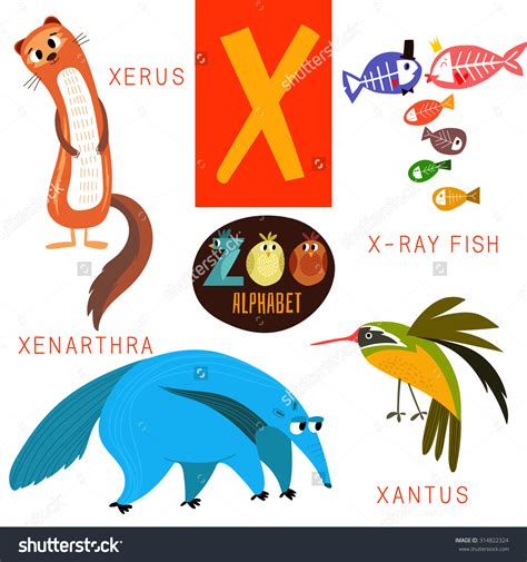animals that start with the letter x worksheets starts with letter x opossumsoft worksheets