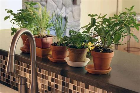 Indoor Windowsill Flowers by Organic Herbs Are A Smart Choice For The Home Herb Garden