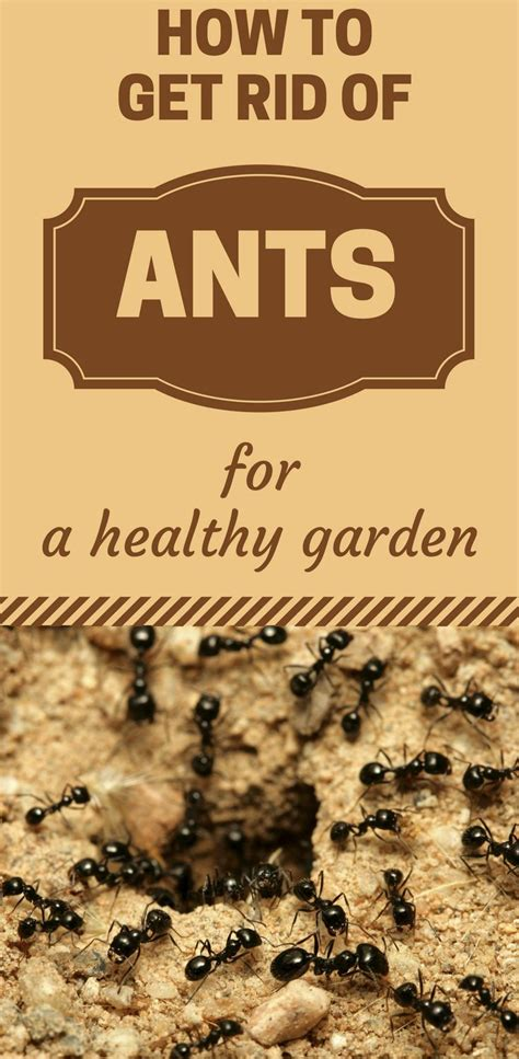 how to get rid of ants on patio plan 1047 best house cleaning images on cleaning