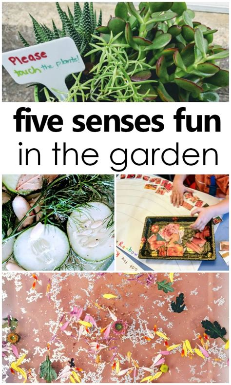 science in the garden 898 | Using all five senses in the garden. Preschool and toddler five senses activities preschool fivesenses sensoryplay
