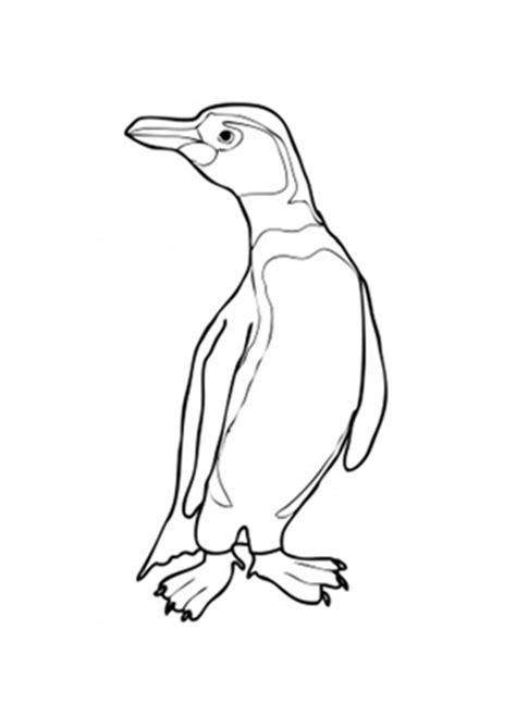 ausmalbilder humboldt pinguin mit kurzem schwanz tiere