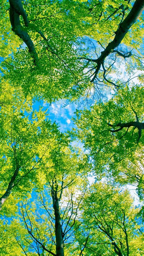Tree Backgrounds by Looking Up At Green Trees Android Wallpaper Free