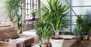 Yucca Palme Winterhart : yucca abschneiden und vermehren mein sch ner garten ~ Frokenaadalensverden.com Haus und Dekorationen