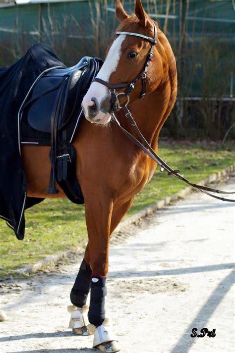 wissenswertes ueber arthrose pferde und therapie