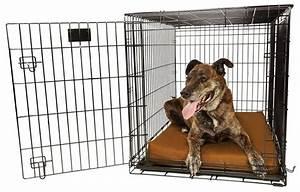 orthopedic 4quot dog crate pad by big barker review With big barker dog crate pad