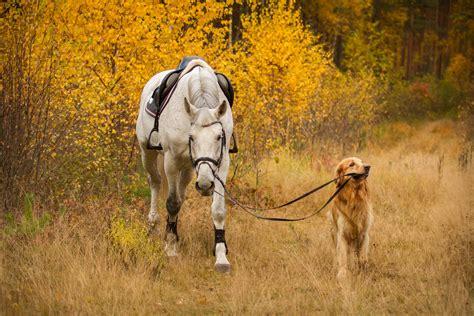 horse og dog smarter than hest heste dogs horses hund nature wildcare blevet det er