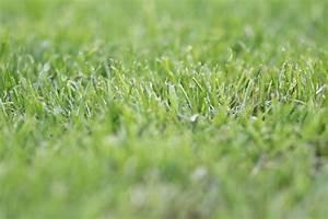 Rasen Nach Düngen Gelb : rasen m hen nach aussaat wann es f r das 1 mal soweit ist ~ Markanthonyermac.com Haus und Dekorationen