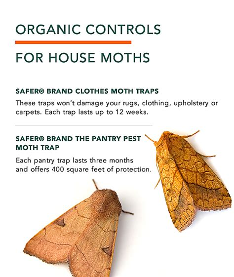 Cycle Of A Pantry Moth Clothes Moths Facts How To Get Rid Of Moths