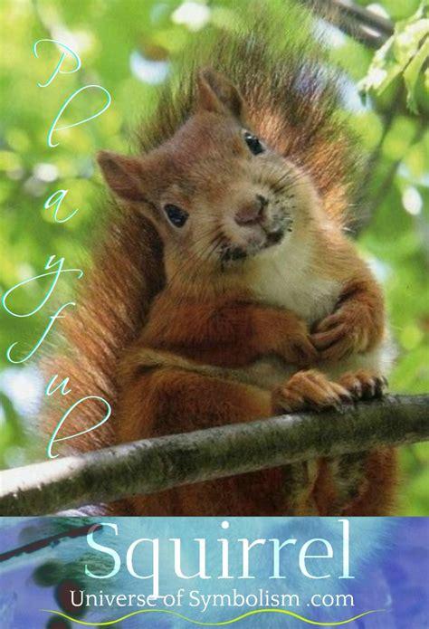squirrel symbolism meaning squirrel spirit animal guidance