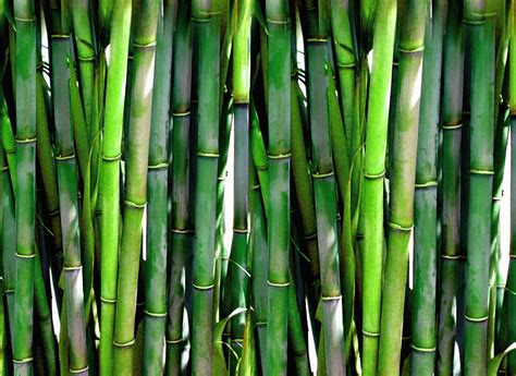 Caboo Blog  Sustainable Sugarcane & Bamboo Paper