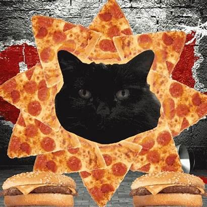 Cat Gifs Memes Ever Bizarre Hummer Litter