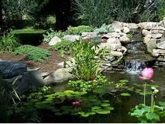 Water Garden Garden Ponds Water Features Water Gardens
