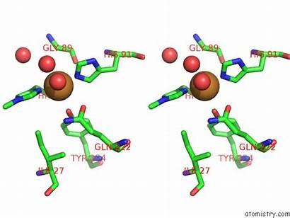 Copper Pdb Stereo Monooxygenase Aa13 Lytic Aspergillus
