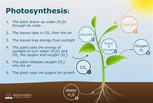 What Is The Source Of Energy For Photosynthesis