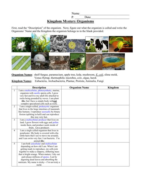 Worksheet Kingdom Classification Worksheet Worksheet Fun Worksheet Study Site