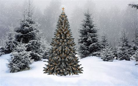 christmas trees and snow snowy tree wallpapers happy holidays