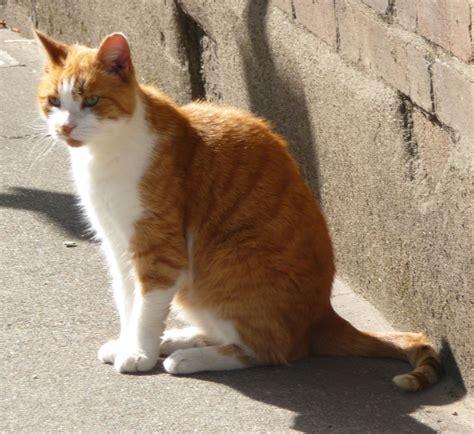 cats cats    cats highbury wildlife
