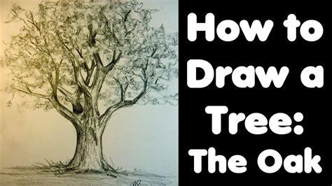 draw  tree  oak youtube