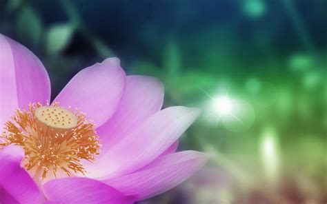 lotus wallpapers best wallpapers
