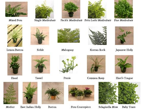 types of flower trees types of ferns 1 10 from 50 votes 5 54 picture pl ferns pinterest fern gardens and plants
