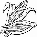 Corn Pannocchia Coloring Colorear Maiz Colorare Elote Fall Dibujos Porumb Imagui Mazorcas Dibujar Disegni Collezione Nuova Imagenes Mazorca sketch template