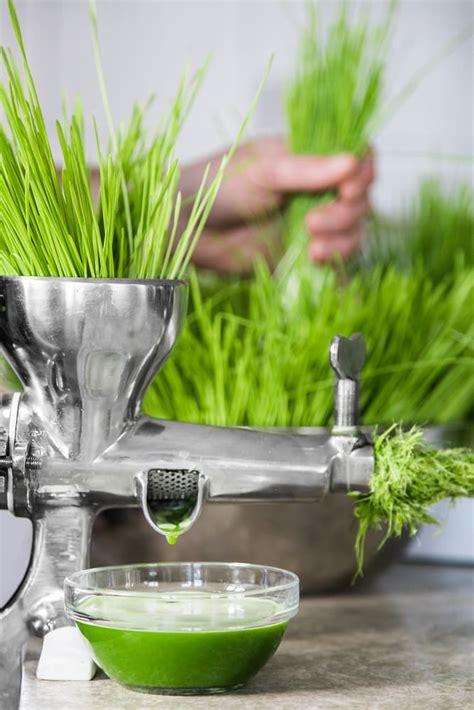 wheatgrass juicer comparison juicers certification