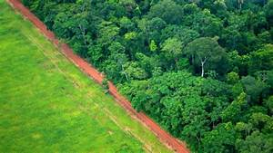 The Largest Ever Tropical Reforestation Is Planting 73