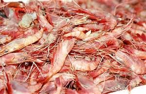 Shrimp/Prawn/Scampi