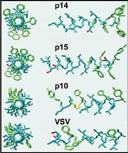 Structural Modeling Of The Fast Protein Tmds  The Amino