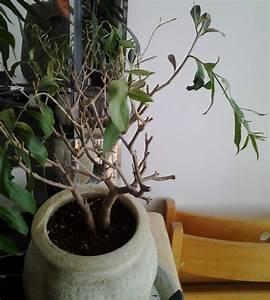 Engrais Olivier Pot. engrais olivier et plantes mediterran ennes ...