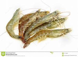 Raw shrimp stock photo. Image of crustacean, sashimi ...