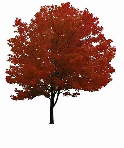 Tree Autumn Transparent Purepng App Cc0