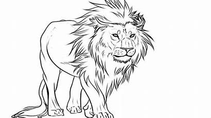 Lion Drawing Draw Face Coloring Pages Easy