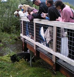 A Bear Viewing Area Is Born  Alaska Department Of Fish And