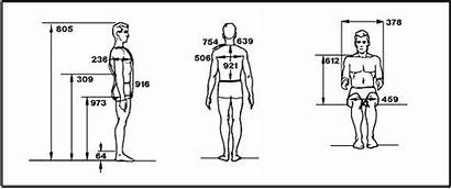 Nasa Anthropometric Human Anthropometrics Data Ergonomics Measurements