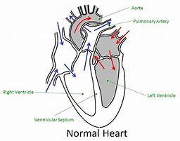 Hd wallpapers heart diagram ks2 designmobile7design hd wallpapers heart diagram ks2 ccuart Choice Image