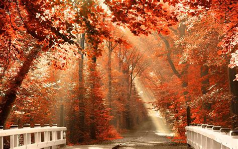 Fall Backgrounds For Desktop by Fall Desktop Wallpapers Top Free