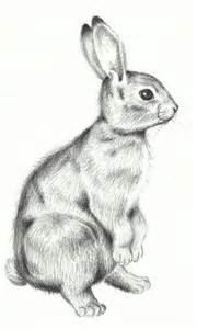 Standing Bunny Rabbits Drawings
