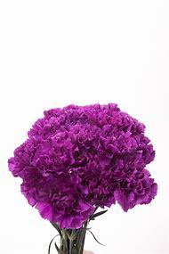 Purple Carnations Flowers