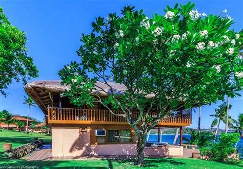 The Rest House At Tali Beach  White Orchid Tree