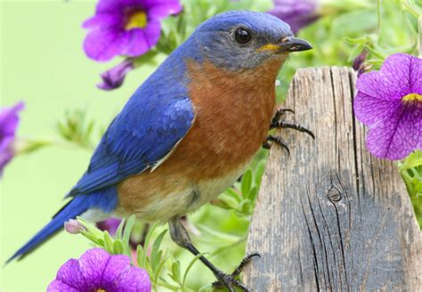 birds of east tennessee johnson pest control pest