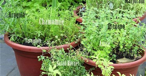 Grow Your Own Perennial Container Herb Garden