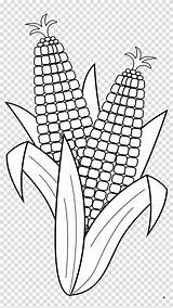 Corn Coloring Maize Cob Candy Popcorn Vegetable Transparent Clipart Hiclipart sketch template